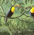 Two Toucans by Don Lindemann