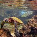 Two Turtles by Bette Phelan