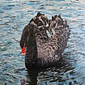 Under Full Sail Black Swan by Leonie Bell