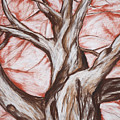 Undulating Tree by John Terwilliger