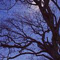 Van Gogh Tree by Perri Kelly