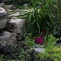Veras Garden by Steve Madore