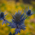 Vibrant Thistles by Mike Reid