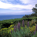 View From Ventana Big Sur by Kathy Yates