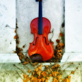 Vines And Violin by Bill Cannon