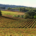 Vineyard 22 by Xueling Zou