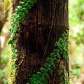 Vining Fern On Sierra Palm Tree by Thomas R Fletcher