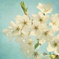 Vintage Spring Blossoms by Kim Hojnacki