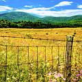 Virginia Fields Of Green by David Hahn