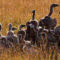 Vultures by Paco Feria