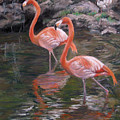 Wading Beauties by Ann Caudle