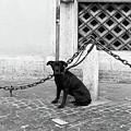 Waiting by John Rizzuto