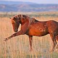 War Horse by Sandy Sisti