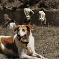 Watchdog by JAMART Photography