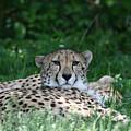 Watchful Resting by Deborah Molitoris