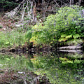 Water Like A Mirror by Greg DeBeck