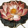Water Lily, 1806 by Granger
