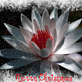 Water Lily Christmas by Donna Bentley