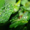 Waterdrops  by Jeff Swan