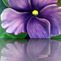 Watery African Violet Reflection by Barbara Griffin