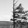 Weathered Tree by Joe  Ng