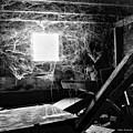 Webbed Window by Blake Richards