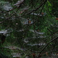 Webs Of A Tree by Greg Patzer