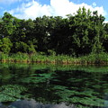 Weeki Wachee River by Barbara Bowen