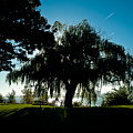Weeping Willow Silhouette by Steven Dunn
