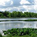 Wetlands by Trisha Dahm