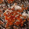 When Fall Meets Winter by DeeLon Merritt