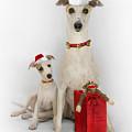 Whippet Christmas by John Clum