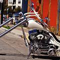 White Cobra by Charles Dobbs