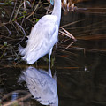 White Egret And Reflection by Peg Runyan