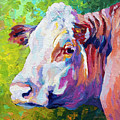 White Face Cow by Marion Rose