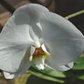 White Flower by Alice Markham