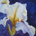 White Iris by Carolyn Jarvis