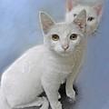 White Kittens by Jane Schnetlage