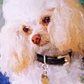 White Poodle by Jai Johnson