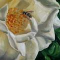 White Rose by Robin Mann
