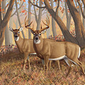 Whitetail Deer Painting - Fall Flame by Crista Forest