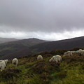 Wicklow Mountains View by Marlou Charlotte De Win