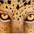 Wild Eyes by Lorraine Foster