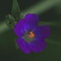 Wild Flower by Kellie  Dean