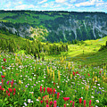 Wild Flowers Blooming On Mount Rainier by Feng Wei Photography