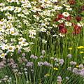 Wild Flowers by Jost Houk