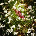 Wild Flowers by Stelios Kleanthous