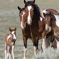 Wild Pinto Family by Carol Walker