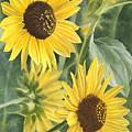 Wild Sunflowers by Sharon Freeman