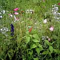 Wildflower Garden by Stuart Parnell